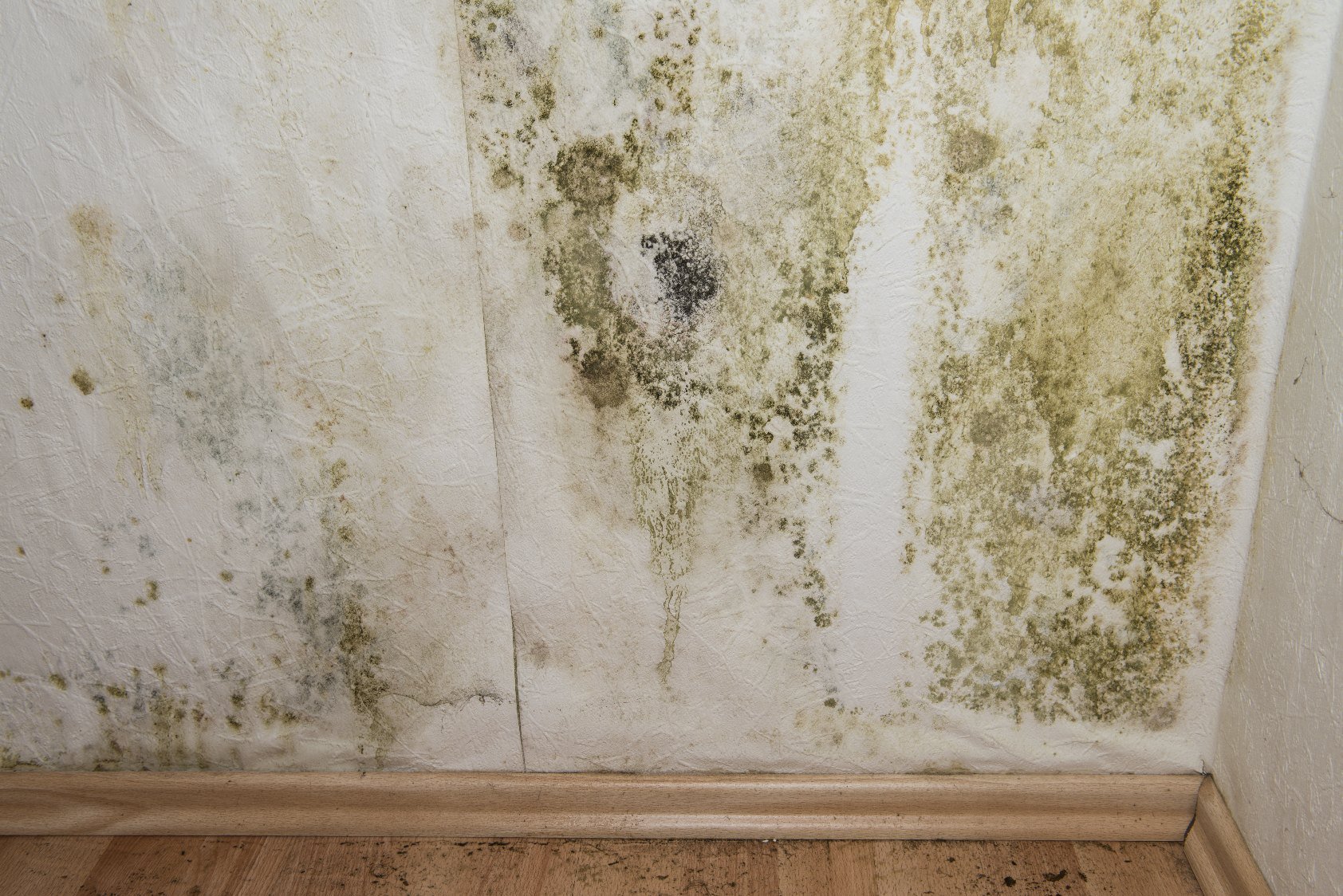 Asheville Mold Remediation Company